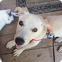 Adopt A Pet :: Giancarlo - Alpharetta, GA