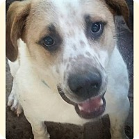 Adopt A Pet :: Baxter - Union City, TN
