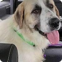 Adopt A Pet :: Gandalf - pending - Beacon, NY