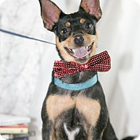 Adopt A Pet :: Rossi - Little Rock, AR