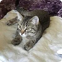 Adopt A Pet :: BUBBA - Lanoka Harbor, NJ