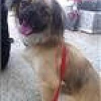 Adopt A Pet :: Timmy - Freeport, NY