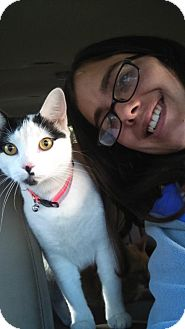 Domestic Shorthair Cat for adoption in Graniteville, South Carolina - Precious