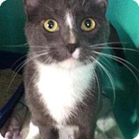 Adopt A Pet :: Marlin - Breinigsville, PA