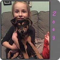 German Shepherd Dog/Shepherd (Unknown Type) Mix Puppy for adoption in Genoa City, Wisconsin - Zoey