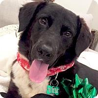 Adopt A Pet :: Bert - Dallas, TX