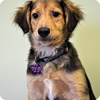 Adopt A Pet :: Rusty - Westport, CT