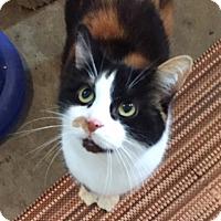 Adopt A Pet :: Lulu - Ashland, OH