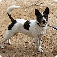 Adopt A Pet :: Pilot - Adoption Pending - Phoenix, AZ