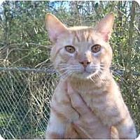 Adopt A Pet :: Quintin - No.Charleston, SC