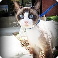 Adopt A Pet :: Sonja - Gadsden, AL