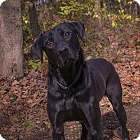 Adopt A Pet :: Irwin - Salem, MA