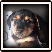 Adopt A Pet :: Jet - Indian Trail, NC