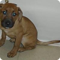 Adopt A Pet :: Bruce - Gary, IN