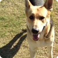 Adopt A Pet :: Titan - Bowie, TX
