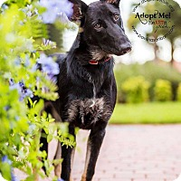 Adopt A Pet :: Jasmine - Ormond Beach, FL