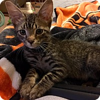 Adopt A Pet :: Doogie - Edmond, OK