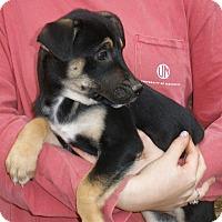 Adopt A Pet :: LIVIA - friendly & beautiful - Pewaukee, WI