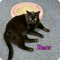 Adopt A Pet :: Bear - Highland, IN