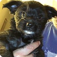 Adopt A Pet :: Harriet - Long Beach, NY