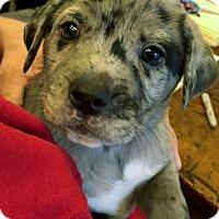 Adopt A Pet :: Baylor - Grafton, WI