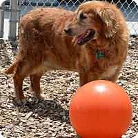 Adopt A Pet :: Molly - Pacific, MO