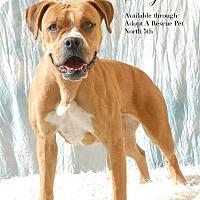 Adopt A Pet :: Shelly - Las Vegas, NV