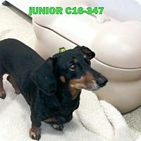 Adopt A Pet :: Junior - Tiffin, OH