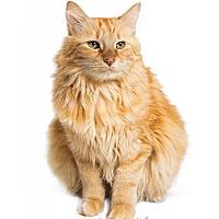 Adopt A Pet :: Sadie - Tempe, AZ