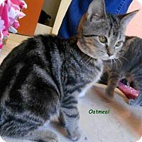Adopt A Pet :: Oatmeal - Oskaloosa, IA