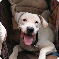 Adopt A Pet :: Jackson - Acushnet, MA