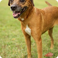 Adopt A Pet :: Tammy - Hagerstown, MD