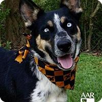 Adopt A Pet :: Sadie - Tomball, TX