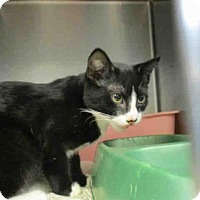 Adopt A Pet :: ZORRO - Fort Walton Beach, FL