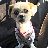 Adopt A Pet :: Mimi is very sweet! - Redondo Beach, CA