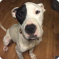 Adopt A Pet :: Keno - Atlanta, GA