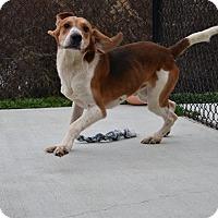 Adopt A Pet :: Floppy - Prince George, VA