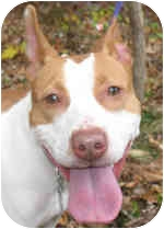 Terrier (Unknown Type, Medium) Mix Dog for adoption in Eatontown, New Jersey - Delilah