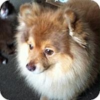Adopt A Pet :: Bubsy - Framingham, MA