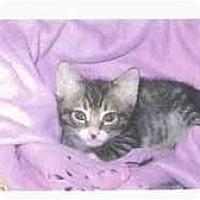 Adopt A Pet :: Spiderboy - Brea, CA