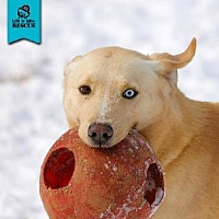 Adopt A Pet :: Mason - Temple, GA