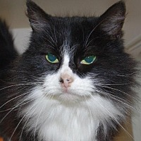 Adopt A Pet :: Oreo - Longview, WA