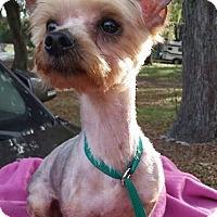 Adopt A Pet :: Lila - Gainesville, FL