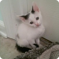 Adopt A Pet :: Domino - McDonough, GA
