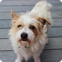 Adopt A Pet :: Wilmur - Smyrna, GA