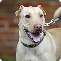 Adopt A Pet :: Pretzel - Kettering, OH