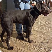 Adopt A Pet :: Riley - Elyria, OH