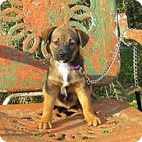 Adopt A Pet :: AVA - Bedminster, NJ