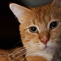 Adopt A Pet :: Quincy - Walla Walla, WA