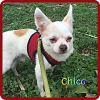 Adopt A Pet :: Chico - Hollywood, FL